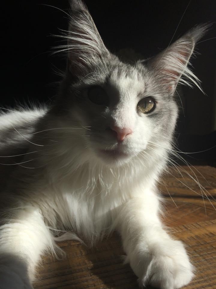 Cat lying down indoors
