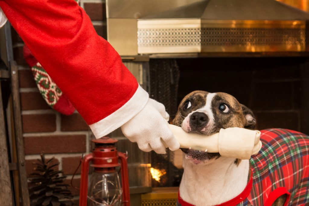 Dog chewing on a bone held by Santa