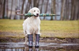 spring pet caution