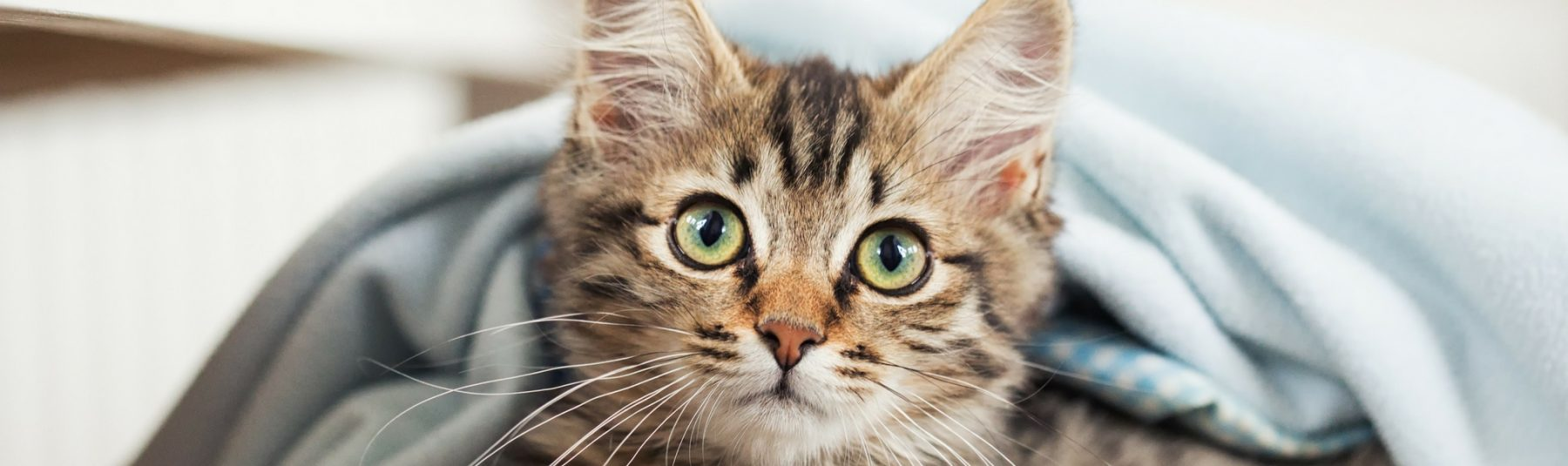 Coccidia In Cats Spread To Humans