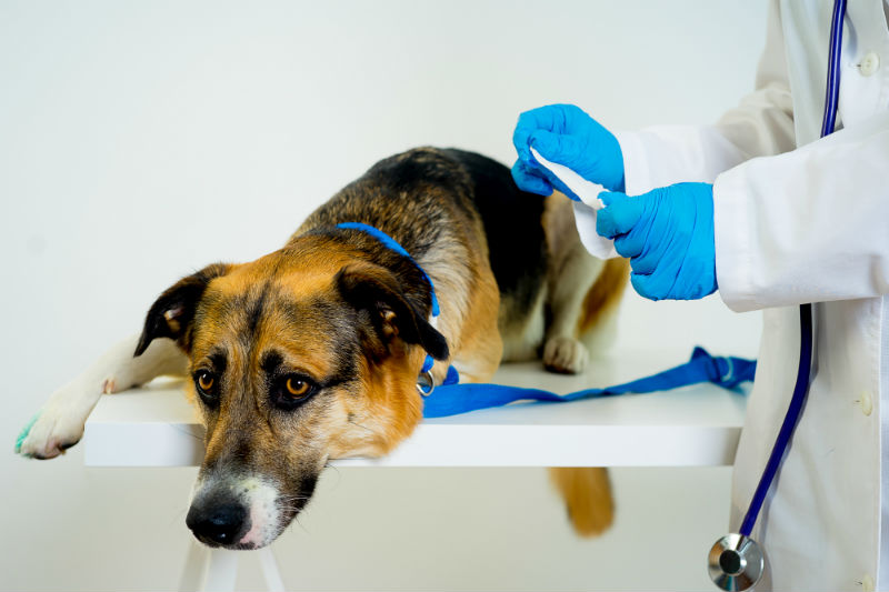 Sick Dog with Doctor