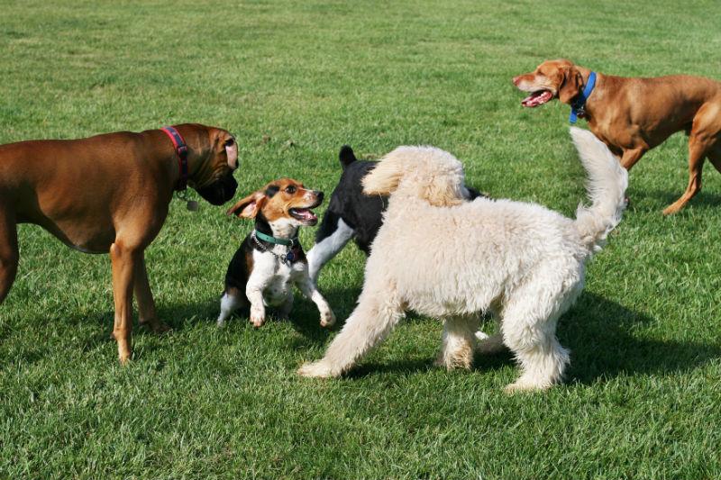 Aurora Update Canine Influenza