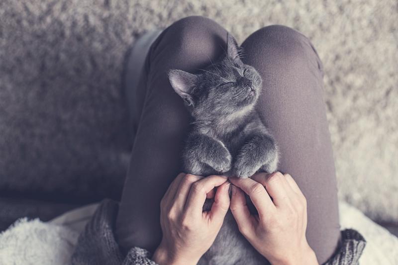 Pet Receiving a Massage
