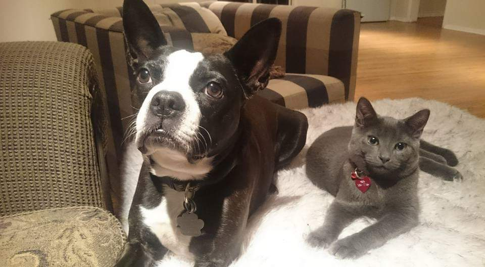 Dog and cat lying on carpet indoors