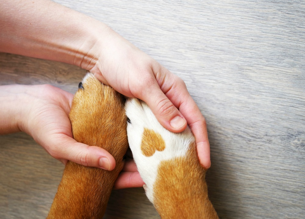 Person holding dog paws